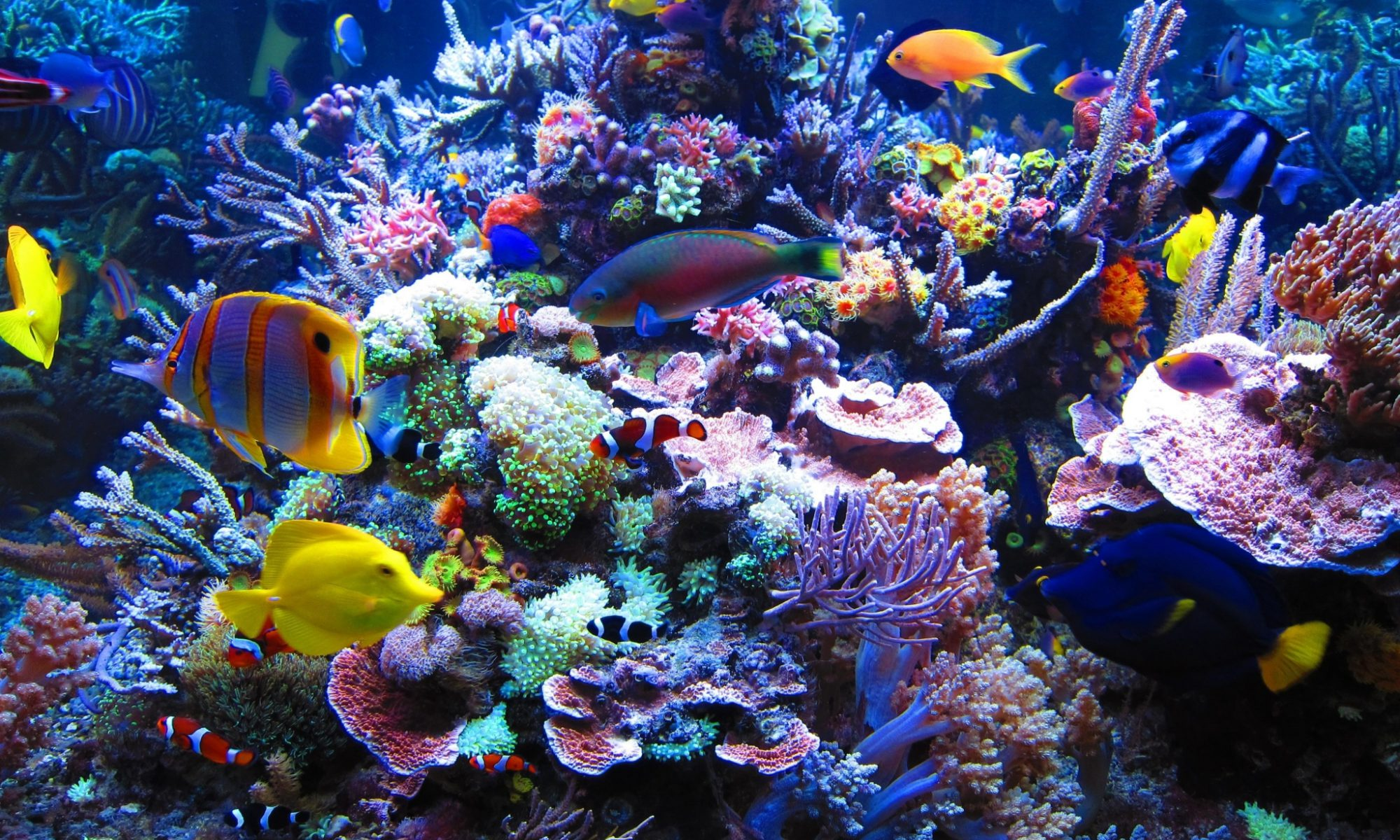 Home Ultimate Aquarium